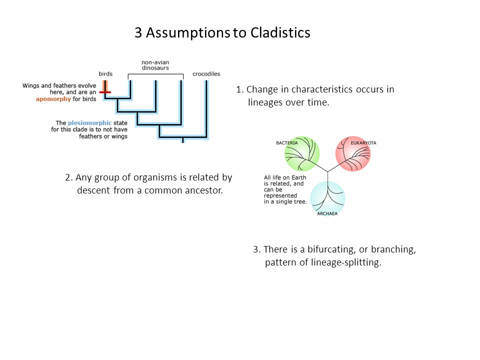 3 Assumptions to Cladistics