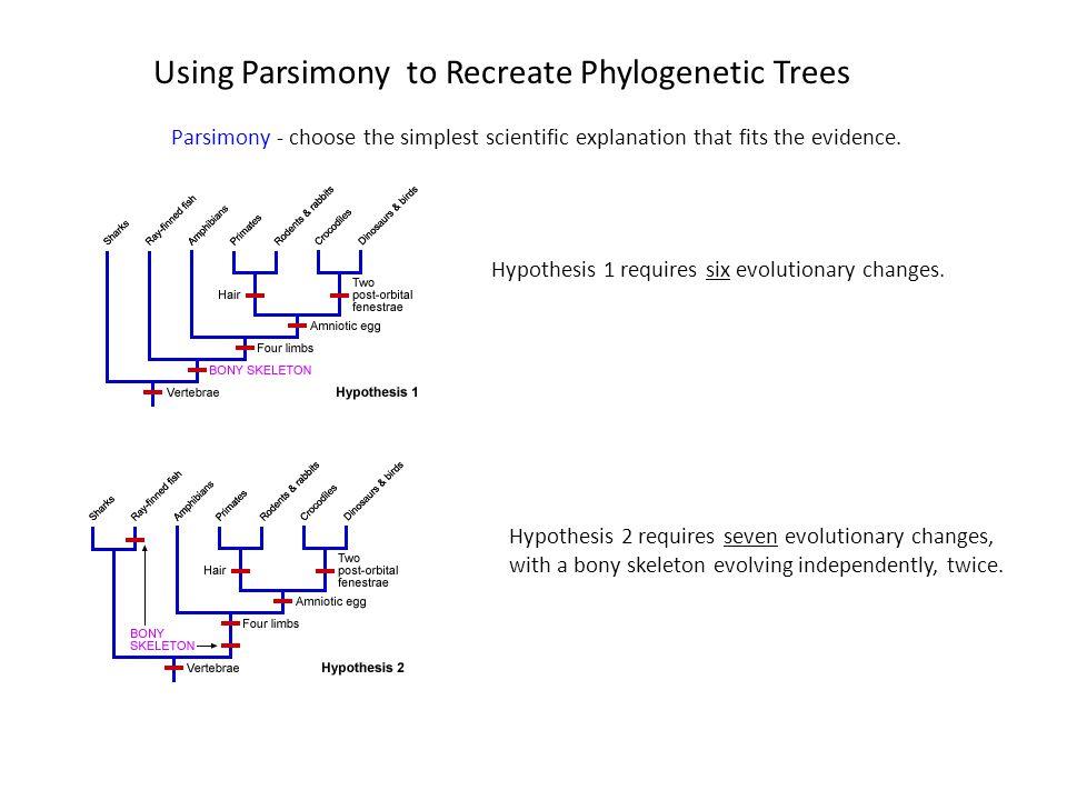 Using Parsimony to Recreate Phylogenetic Trees
