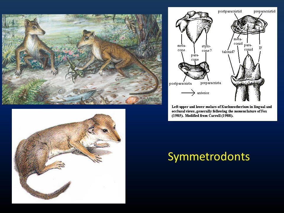 Symmetrodonts