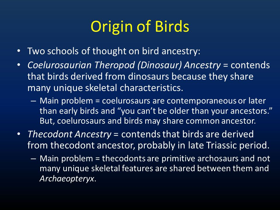 Origin of Birds Two schools of thought on bird ancestry: