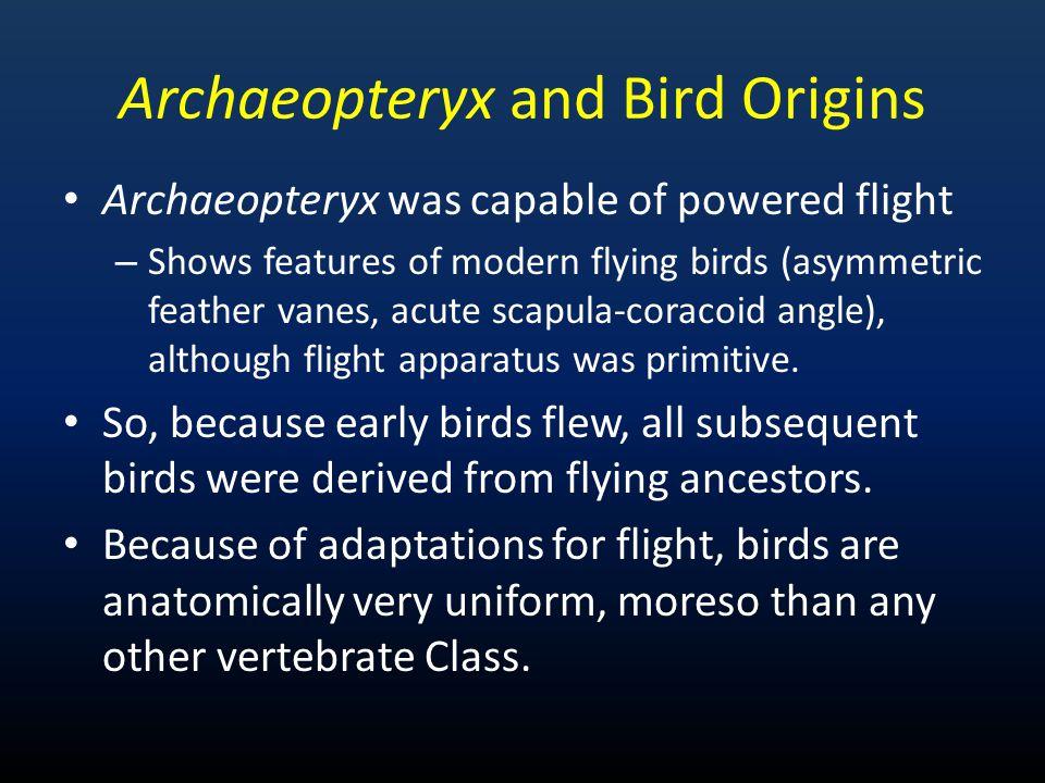 Archaeopteryx and Bird Origins