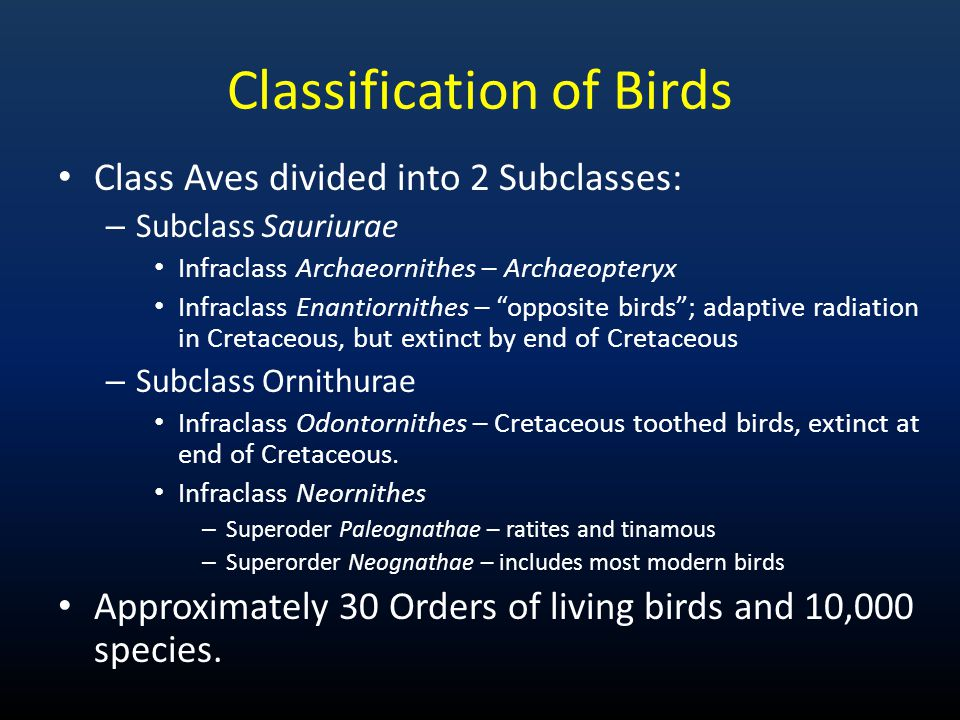 Classification of Birds