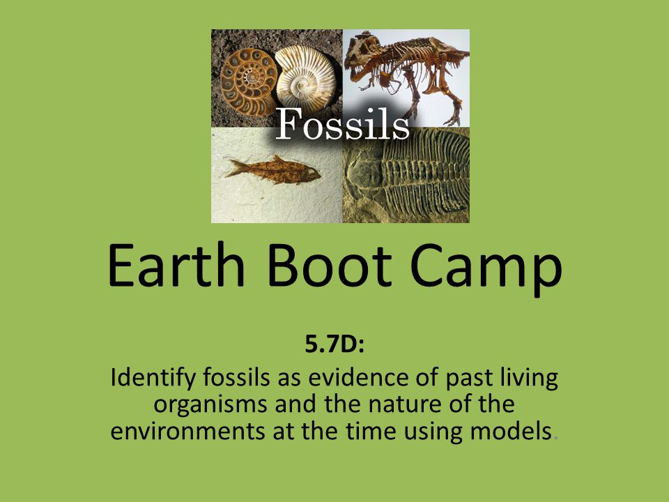 Earth Boot Camp 5.7D: Identify fossils as evidence of past living organisms and the nature of the environments at the time using models.