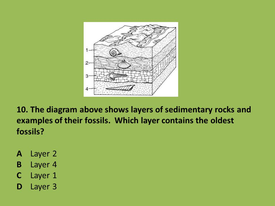 10. The diagram above shows layers of sedimentary rocks and examples of their fossils.