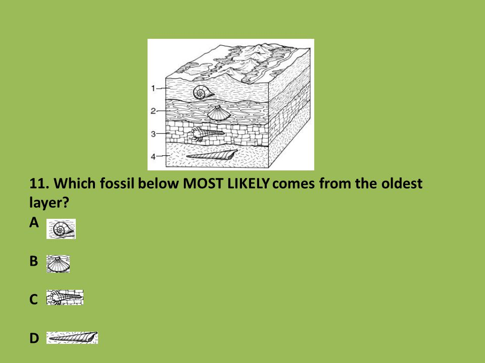 11. Which fossil below MOST LIKELY comes from the oldest layer A B C D