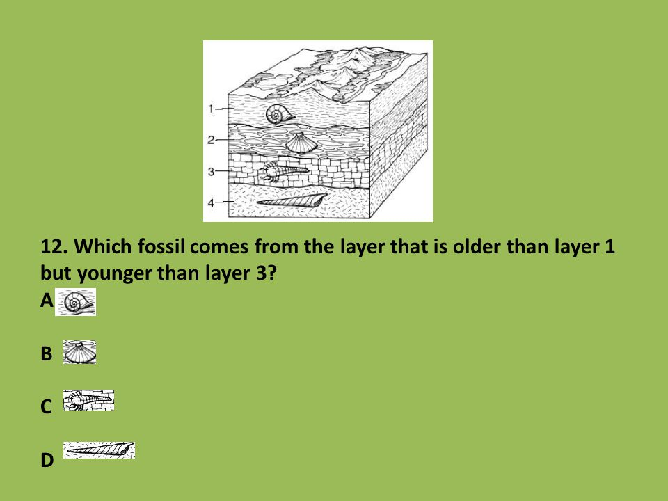 12. Which fossil comes from the layer that is older than layer 1 but younger than layer 3 A B C D