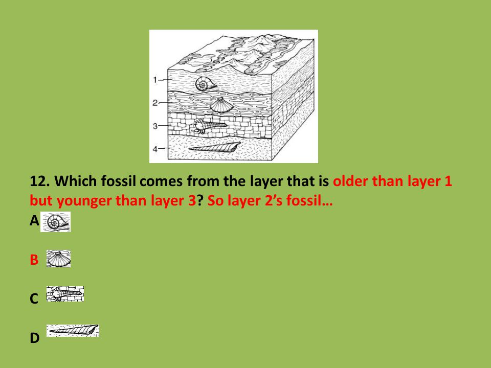 12. Which fossil comes from the layer that is older than layer 1 but younger than layer 3.
