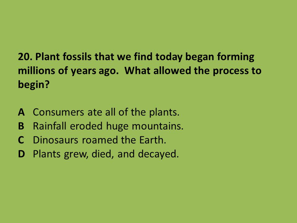 20. Plant fossils that we find today began forming millions of years ago.