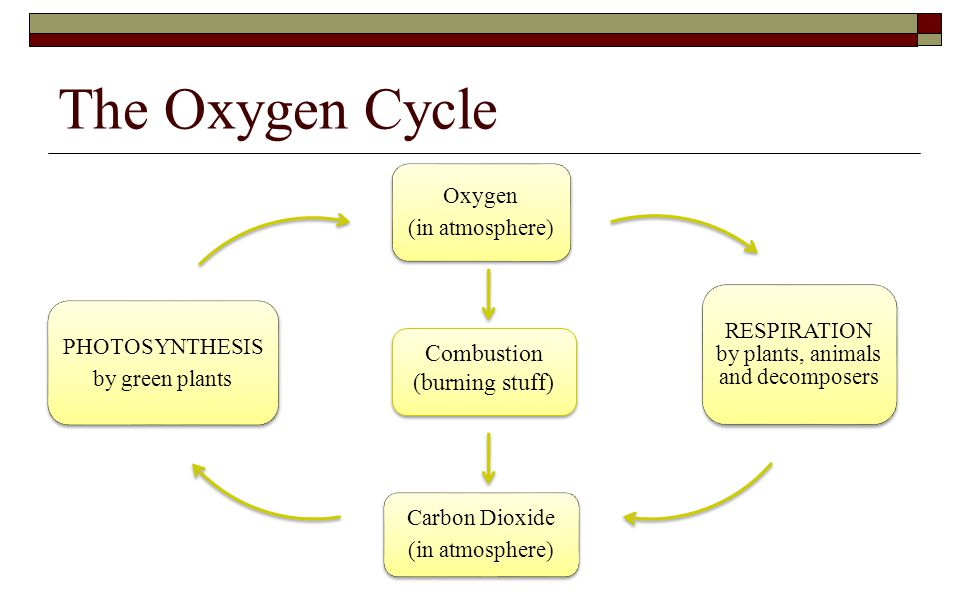 RESPIRATION by plants, animals and decomposers
