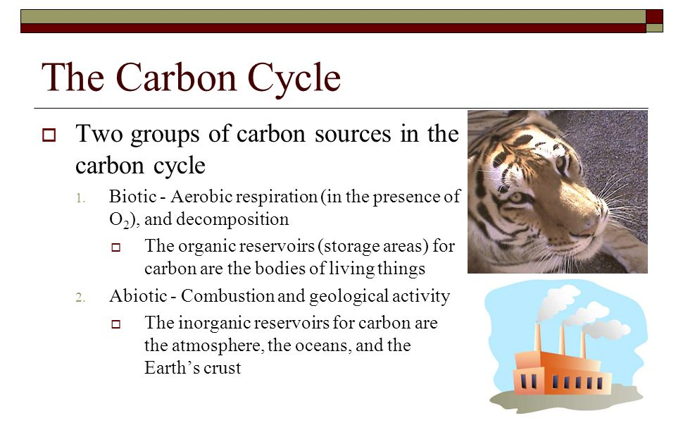 The Carbon Cycle Two groups of carbon sources in the carbon cycle