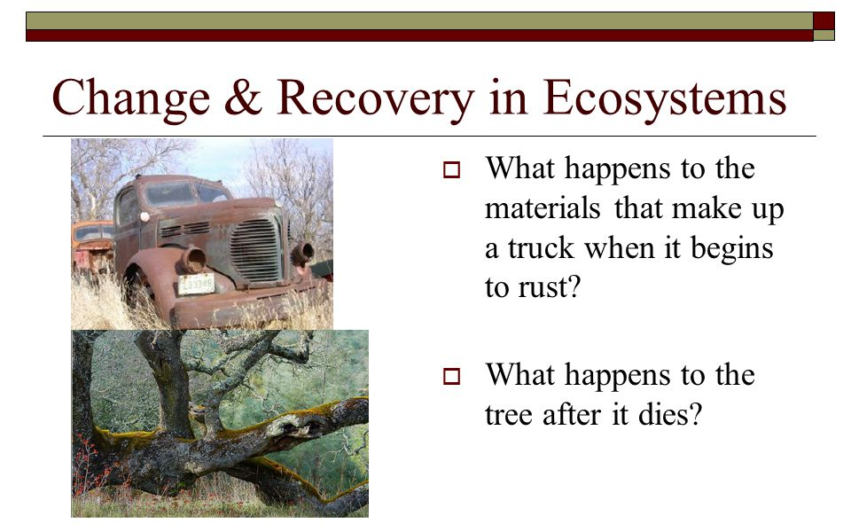 Change & Recovery in Ecosystems