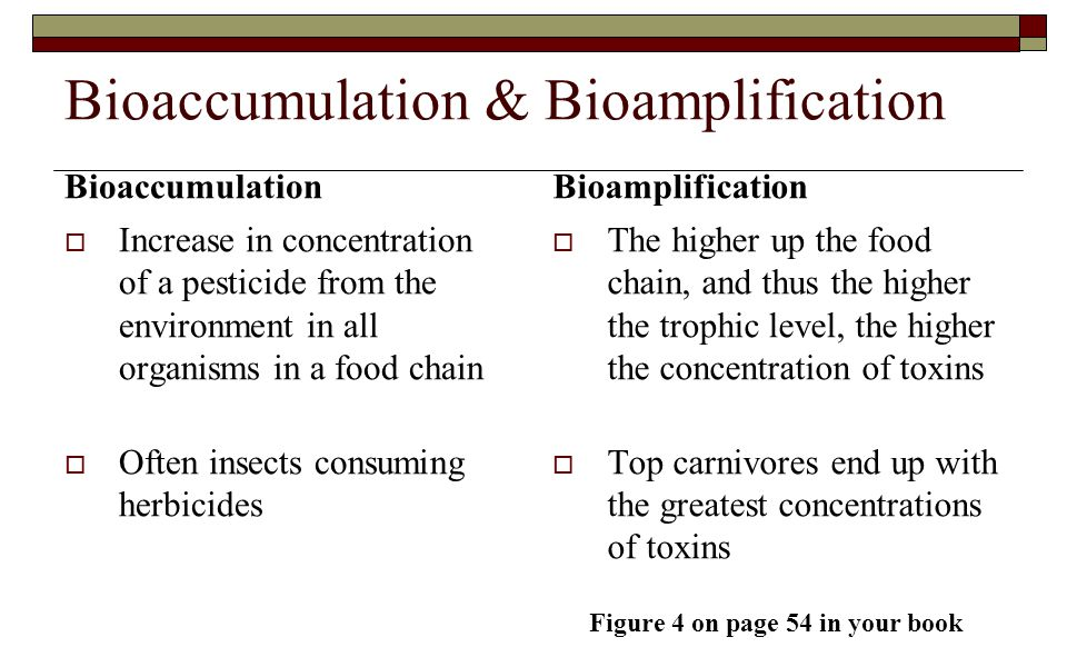 Bioaccumulation & Bioamplification