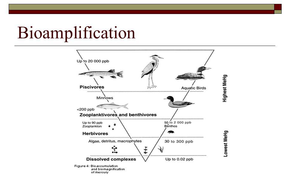 Bioamplification