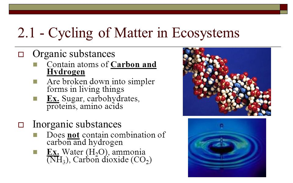 2.1 - Cycling of Matter in Ecosystems