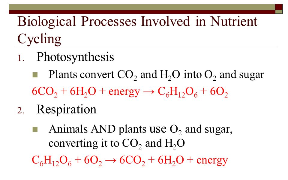Biological Processes Involved in Nutrient Cycling