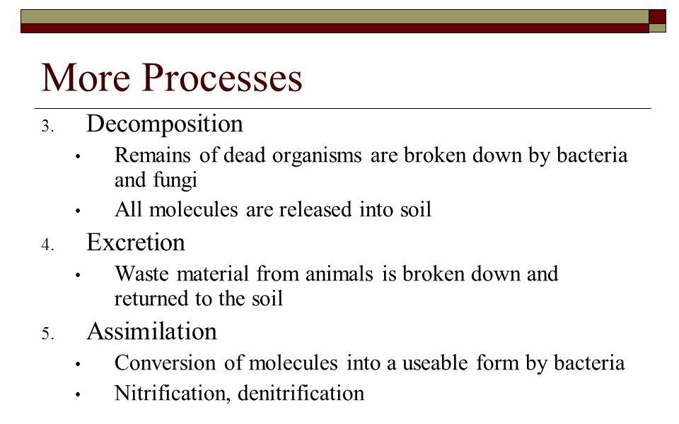 More Processes Decomposition Excretion Assimilation