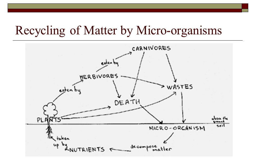 Recycling of Matter by Micro-organisms