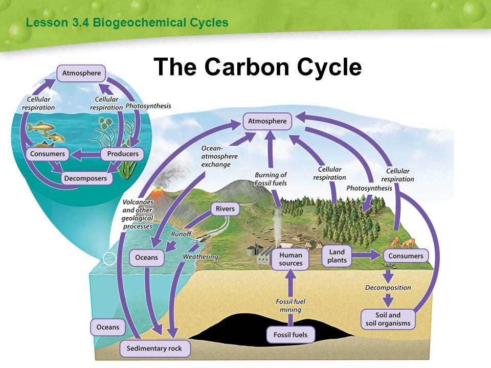 Lesson 3.4 Biogeochemical Cycles
