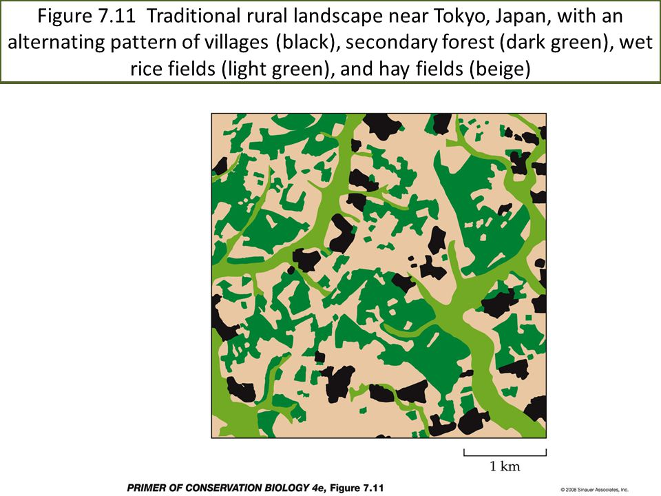 Figure 7.11 Traditional rural landscape near Tokyo, Japan, with an alternating pattern of villages (black), secondary forest (dark green), wet rice fields (light green), and hay fields (beige)