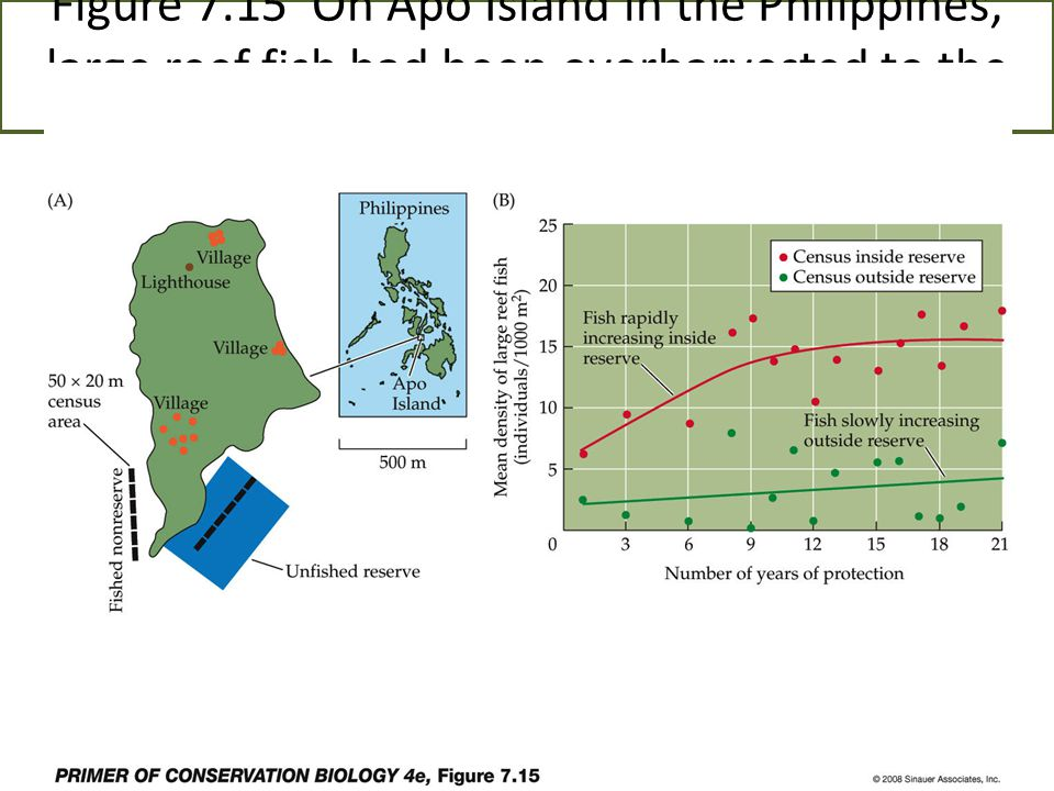 Figure 7.15 On Apo Island in the Philippines, large reef fish had been overharvested to the point where they were rarely seen