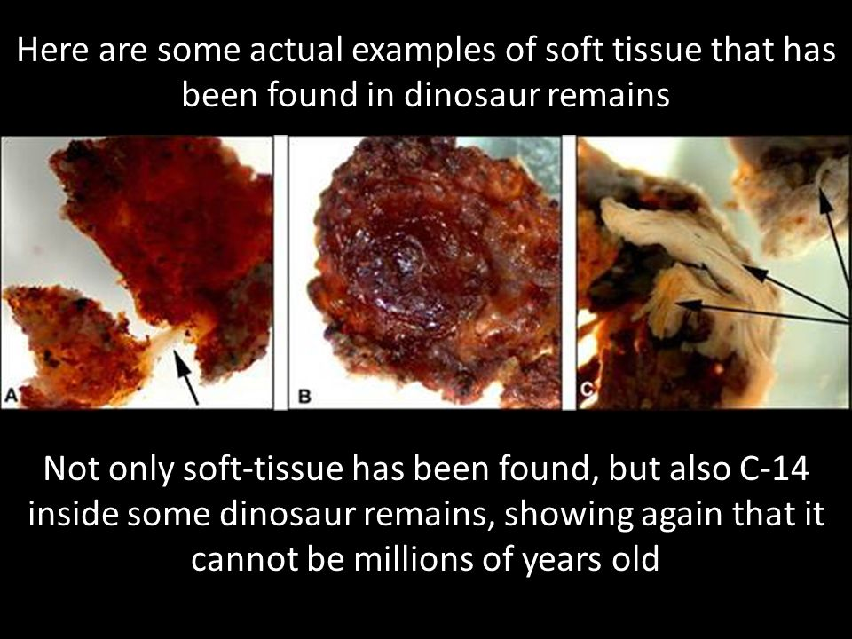 Here are some actual examples of soft tissue that has been found in dinosaur remains