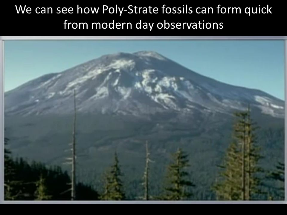 We can see how Poly-Strate fossils can form quick from modern day observations