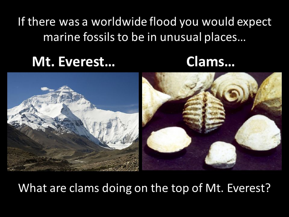 Mt. Everest… Clams… If there was a worldwide flood you would expect