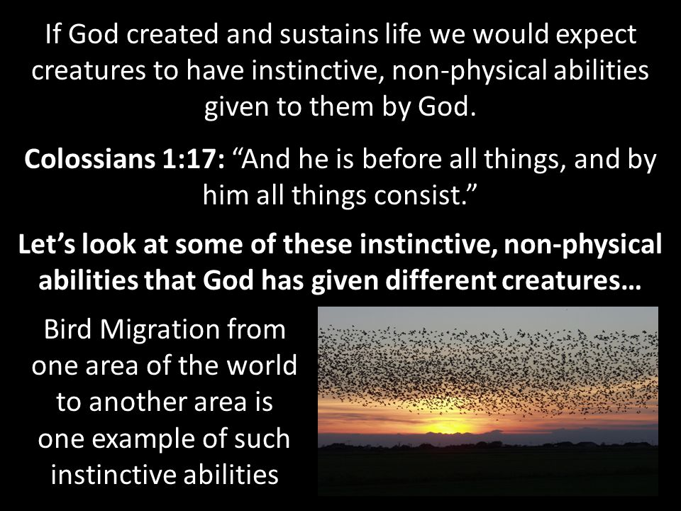 If God created and sustains life we would expect creatures to have instinctive, non-physical abilities given to them by God.