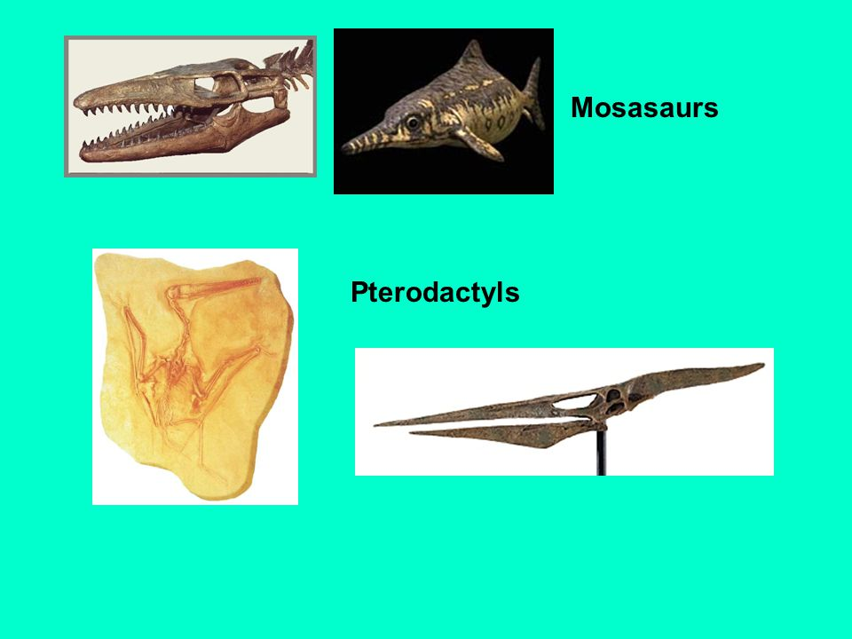 Mosasaurs Pterodactyls