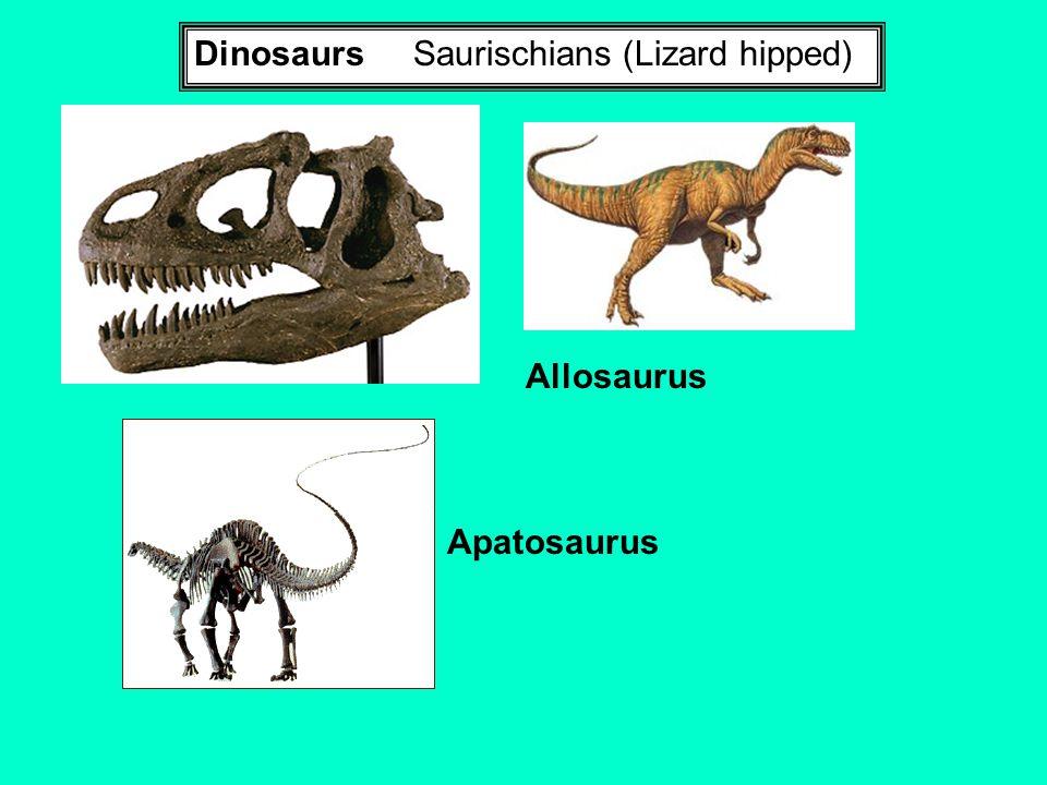 Dinosaurs Saurischians (Lizard hipped)