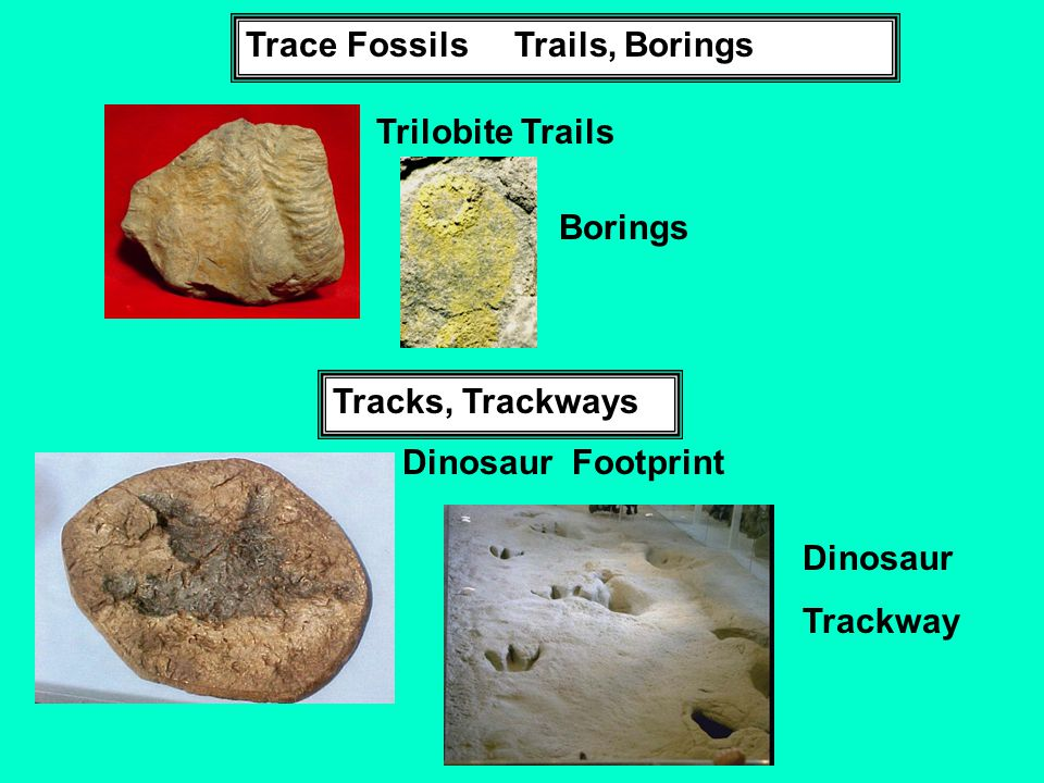 Trace Fossils Trails, Borings