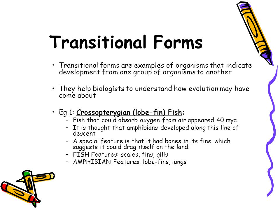 Transitional Forms Transitional forms are examples of organisms that indicate development from one group of organisms to another.
