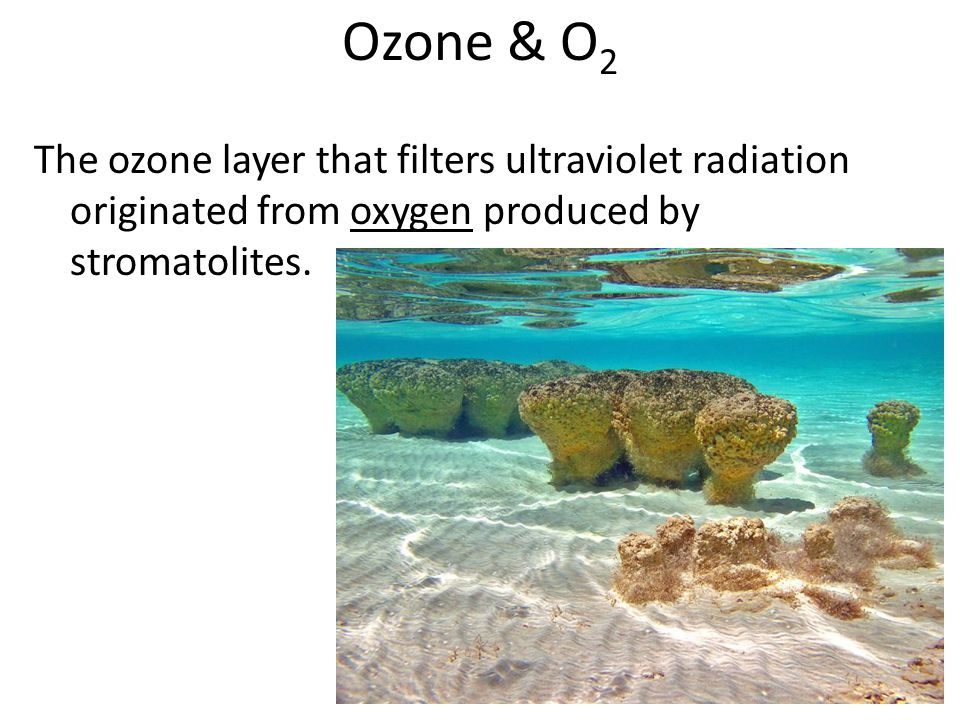 Ozone & O2 The ozone layer that filters ultraviolet radiation originated from oxygen produced by stromatolites.