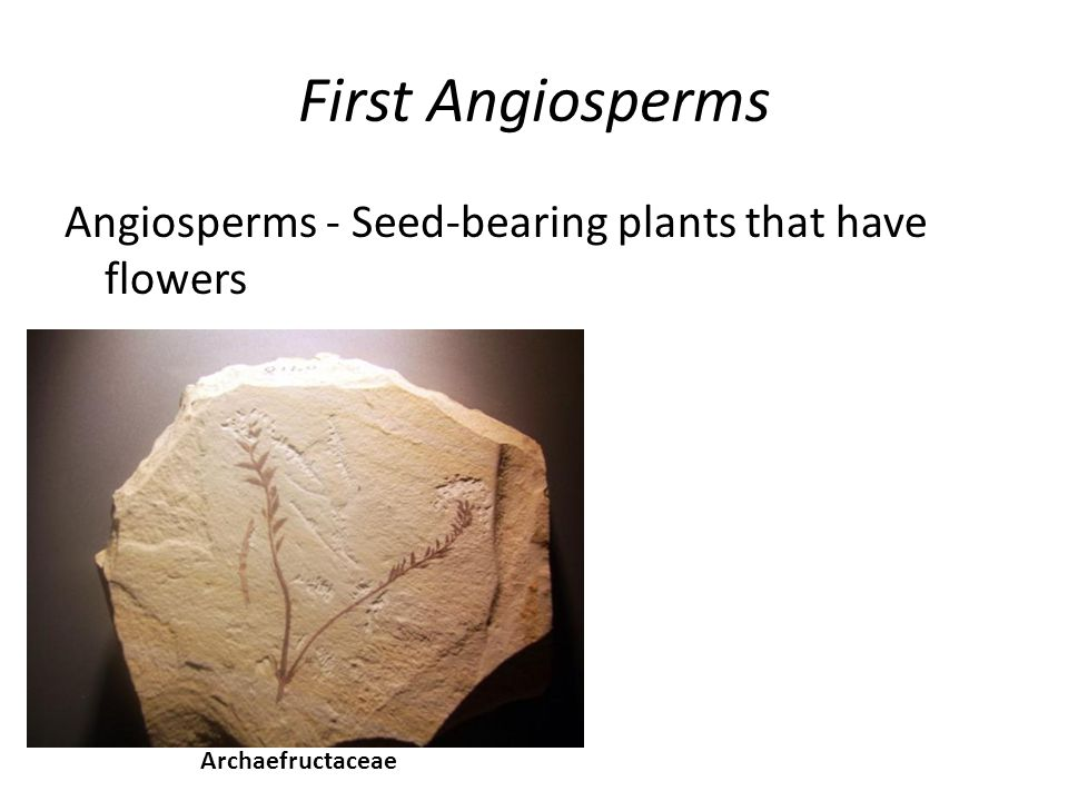 First Angiosperms Angiosperms - Seed-bearing plants that have flowers