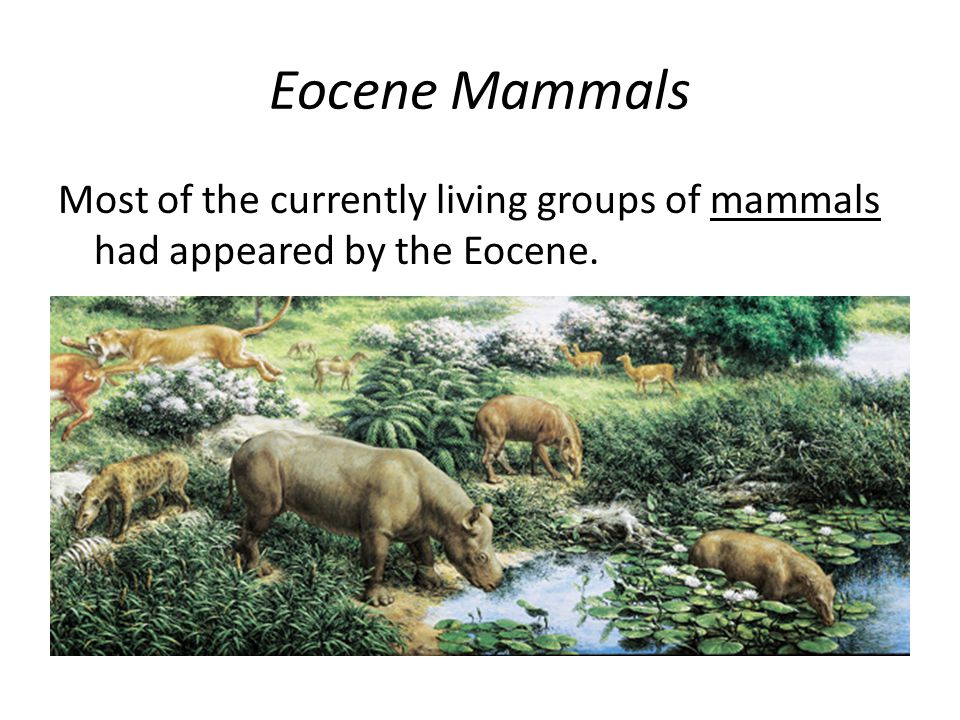 Eocene Mammals Most of the currently living groups of mammals had appeared by the Eocene.