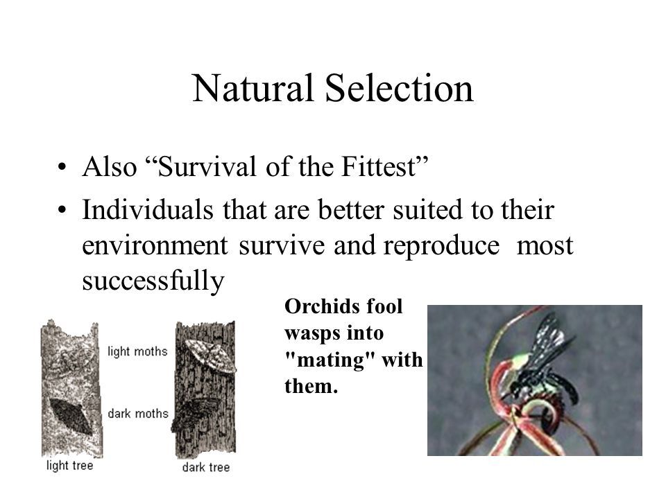 Natural Selection Also Survival of the Fittest