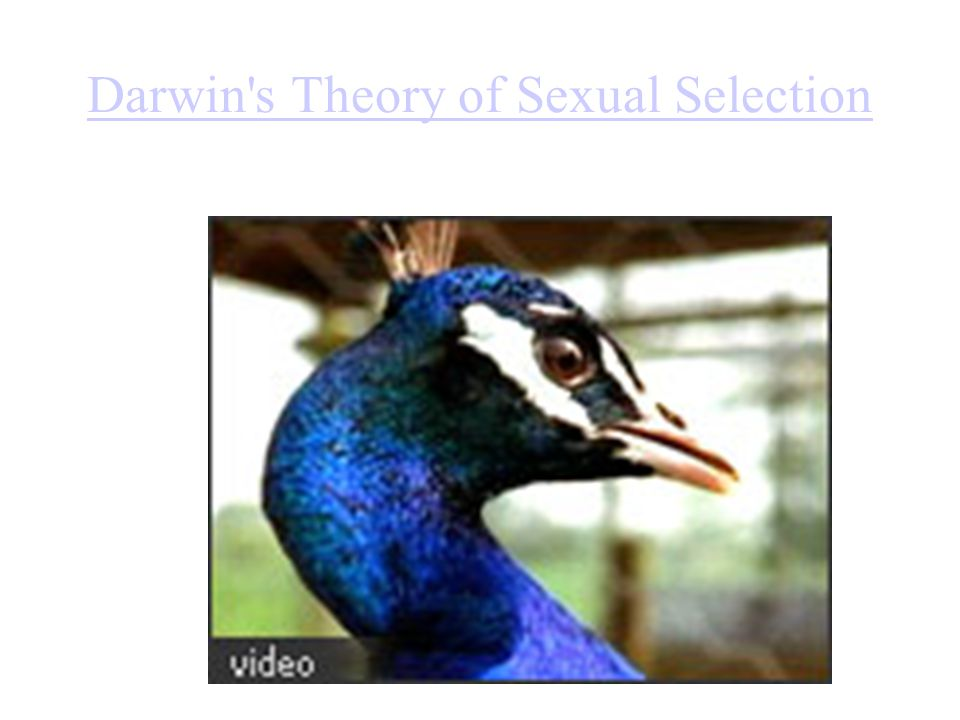 Darwin s Theory of Sexual Selection