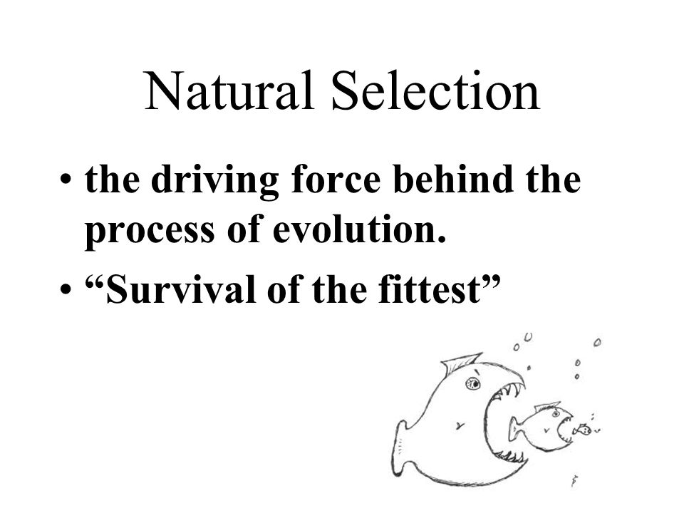 Natural Selection the driving force behind the process of evolution.