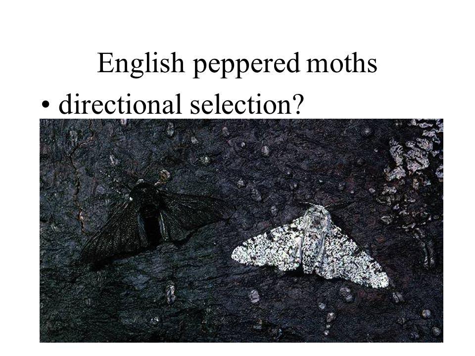 English peppered moths