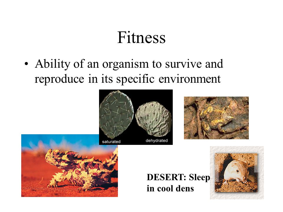 Fitness Ability of an organism to survive and reproduce in its specific environment.
