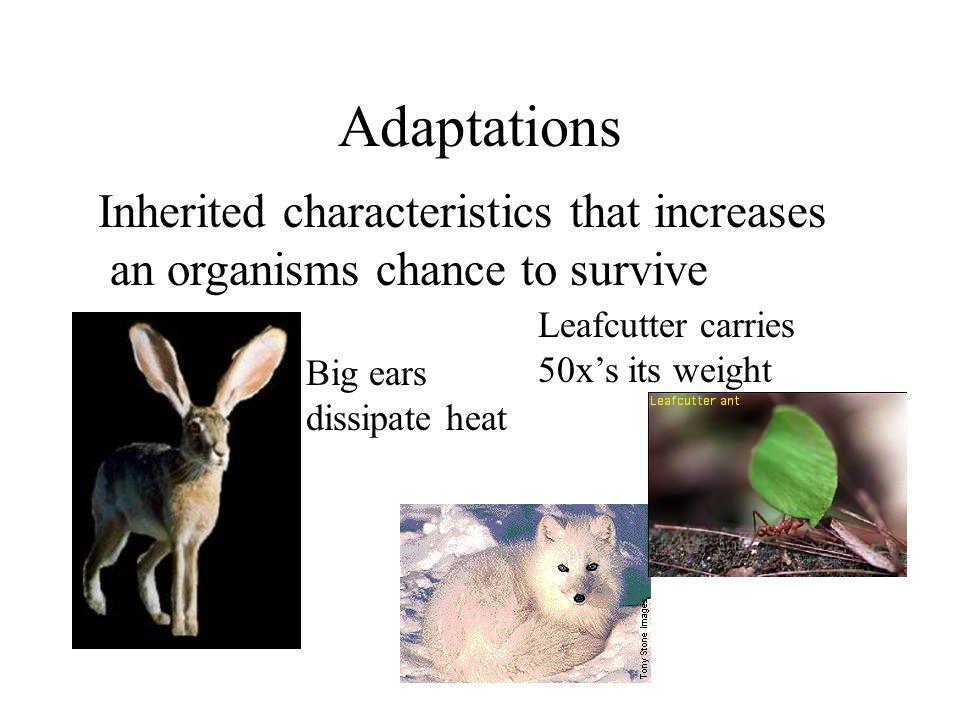 Adaptations Inherited characteristics that increases