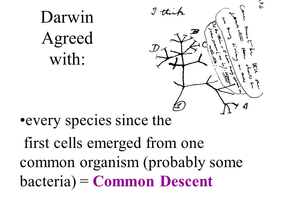 Darwin Agreed with: every species since the