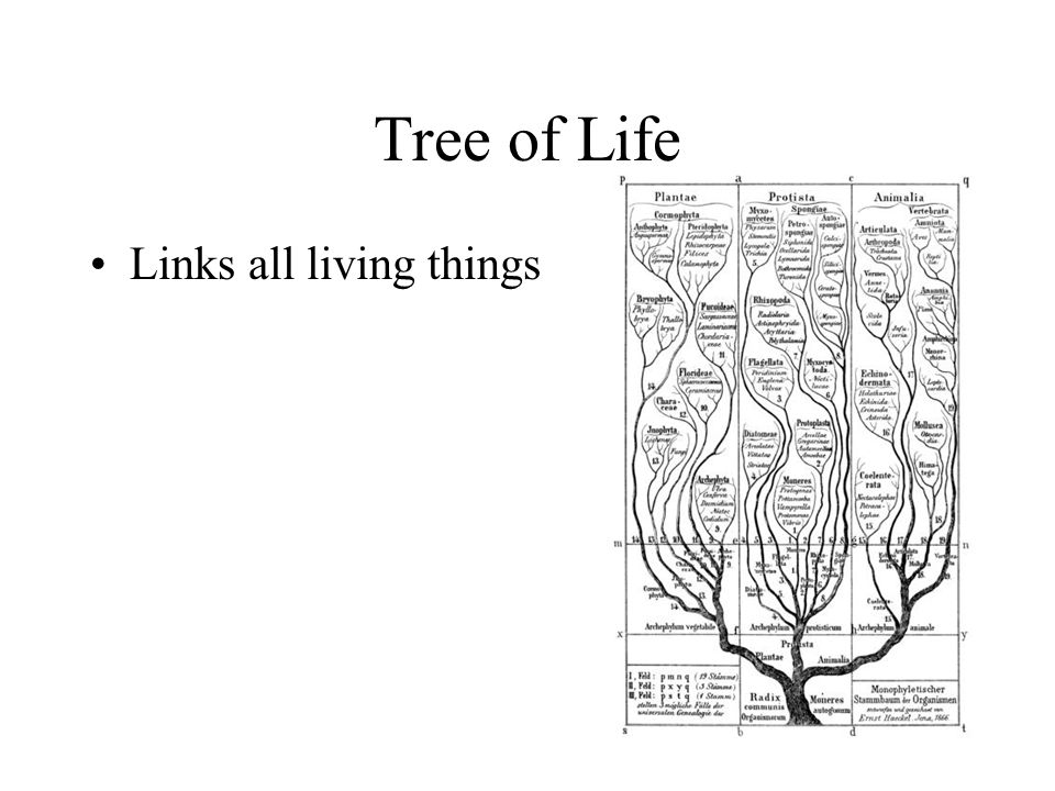 Tree of Life Links all living things