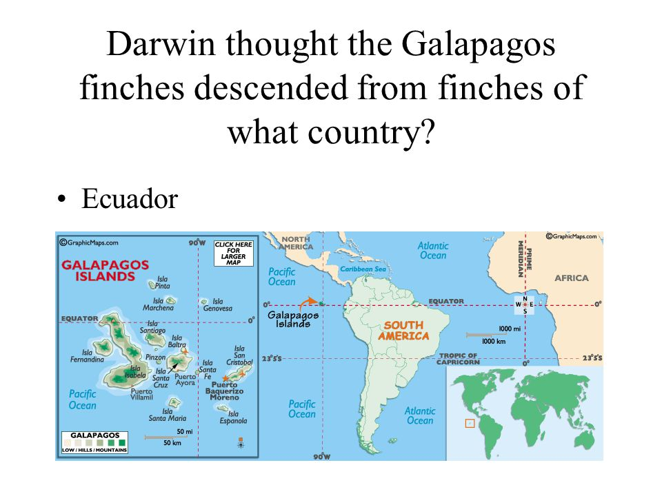 Darwin thought the Galapagos finches descended from finches of what country