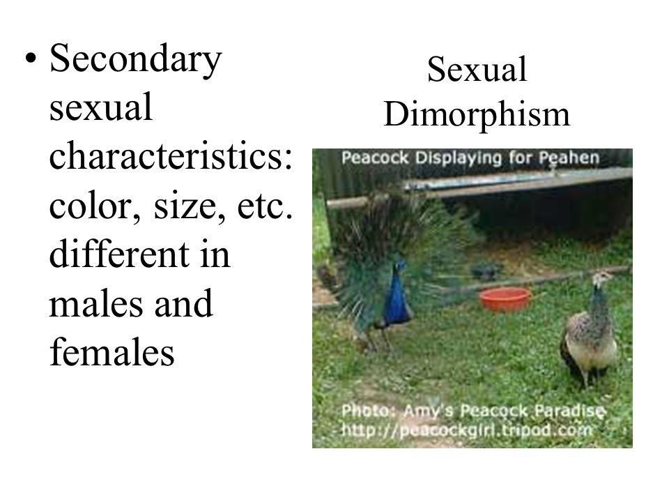 Secondary sexual characteristics: color, size, etc