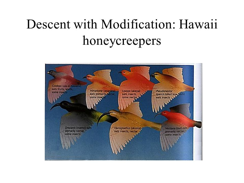 Descent with Modification: Hawaii honeycreepers