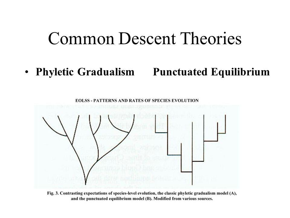 Common Descent Theories