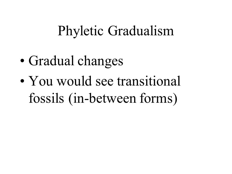 Phyletic Gradualism Gradual changes You would see transitional fossils (in-between forms)