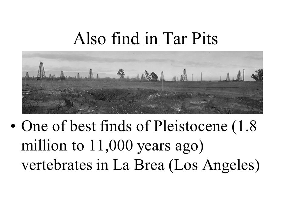 Also find in Tar Pits One of best finds of Pleistocene (1.8 million to 11,000 years ago) vertebrates in La Brea (Los Angeles)