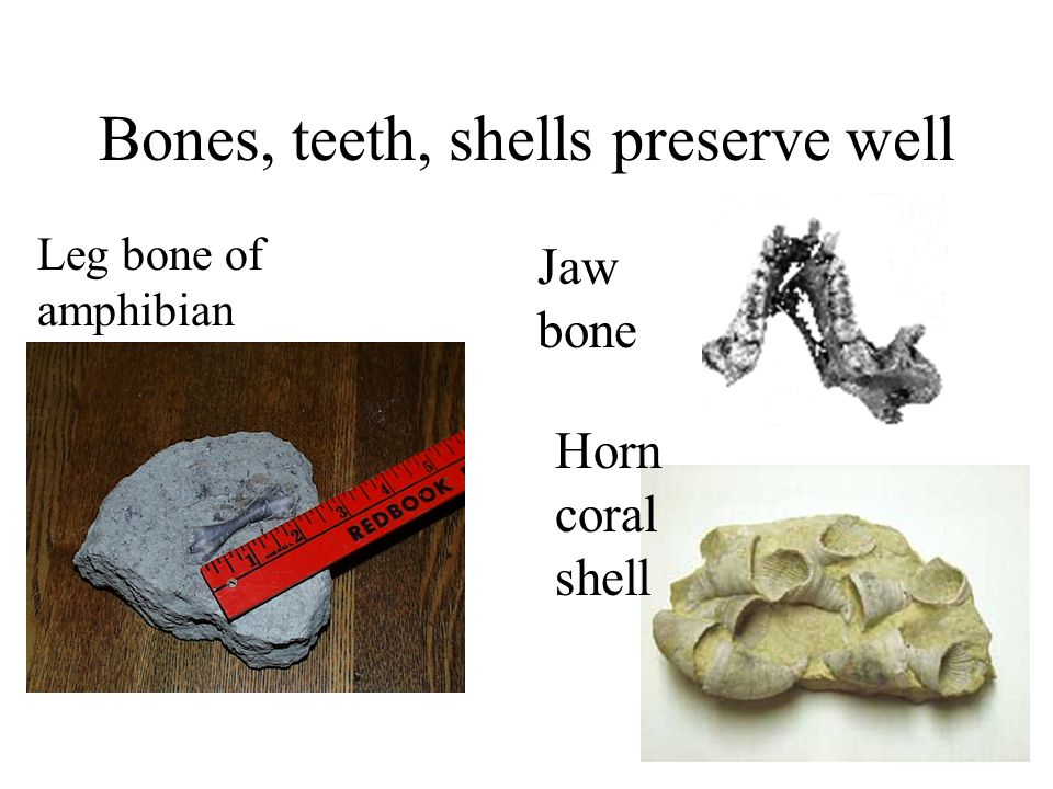 Bones, teeth, shells preserve well